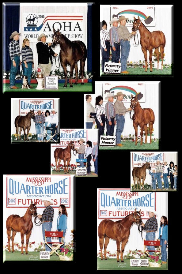 A bunch of Cicle Bar Ranch`s Quarter Horses. Casino_get