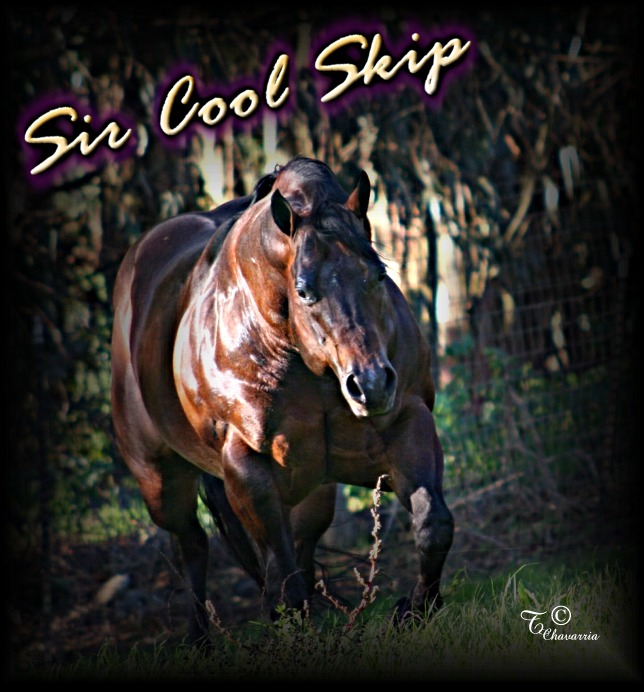 A bunch of Cicle Bar Ranch`s Quarter Horses. Sir_cool_skip_running_1_6_06